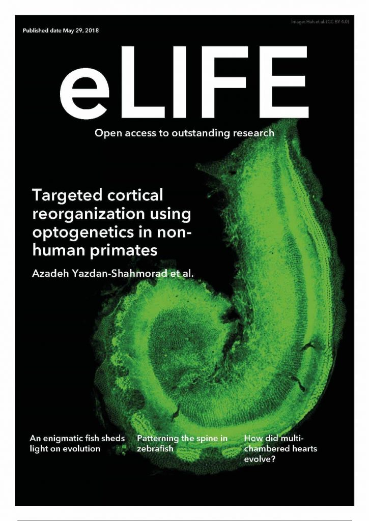 Cover of eLIFE journal with paper published by Azadeh Yazdan